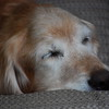 536 3775 Sasha June 2 2011