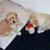 05 Sasha Puppy Apr 26 1998