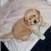 06 4 Sasha  Apr 29 1998