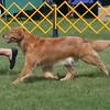 83 5288 Sasha moving July 17 2004
