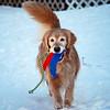 328 0699 Sasha Feb 4 2010 crop