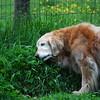 527 3698 Sasha June 2 2011