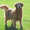 277 DSC_4456 Sasha Sept 26 2009 crop
