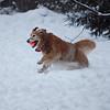 321 0096 Sasha Jan 1 2010