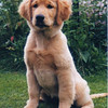 08 5 Puppy Pic  July 5  1998