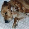 01 Shawnee Sasha Mar 27 1998