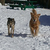 96 6701 Boomer Sasha Feb 27 2005