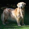 361 3414 Sasha July 3 2010 crop