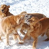 431 0310 Sasha Sydney Stormy Slammer Jan 28 2011 crop