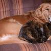 84 6308 Savanah Kally Kitty Dec 30 2004