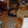 472 7941 Shayla Solo Skylar Savanah Sydney Sandi Stormy Sasha Slammer Oct 19 2010