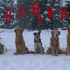 46 1451 Christmas Pic  Nov 19 2002
