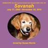 494 Savanah_slide