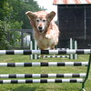 Flying over the spread jump.  At 8 years old she was still very athletic - July 7, 2002