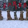 My Christmas card photo taken in my back yard, Savanah, Sasha, Boomer, Shawnee & Shiloh - November 19, 2002
