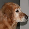 Shawnee profile and I see Sasha so much in this picture - February 10, 2002