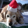 She was not happy with wearing the hat so she wouldn't look at me - December 25, 2004