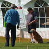 We were in the Veteran obedience class at the GRCC National Specialty - June 1, 2002