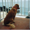 Shawnee on our little patio watching the waves - November 1996