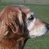 The birthday girl's pretty profile - April 30, 2003