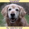 150 Shawnee Sweetest Dog