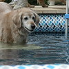 Going into the pool at our first Lazystock - August 1, 2004