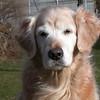 238 D3375 Shawnee Dec 25 2006