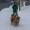 The Golden sled dog team.  Sasha leading Shawnee and Savanah - February 17, 2002