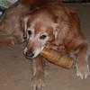"""Shawnee with her Christmas """"beer bottle"""" rawhide - December 25, 2001"""