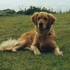 At Astwood Park in Bermuda - November 1996