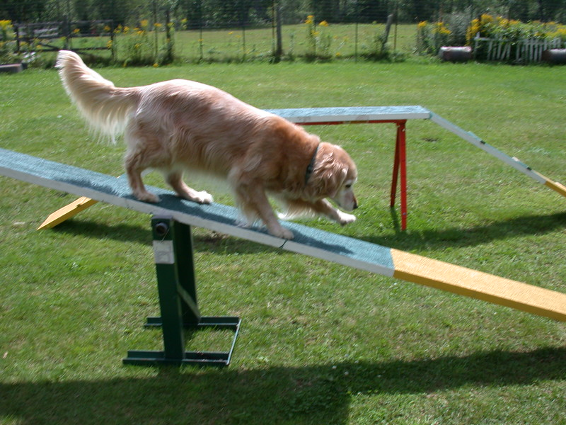 Showing her agility skills on the see-saw - August 14, 2004