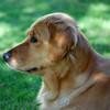 148 DSC_3789 Shayla Sept 5 2009