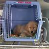 16 2111 Shayla crate in car  Mar 21 2003
