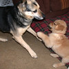 09 1948 Boomer Shayla play  Mar 5 2003