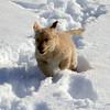 15 2080 Shayla run  Mar 16 2003