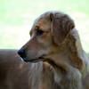 151 DSC_4380 Shayla Sept 21 2009