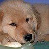17 2113 Shayla crate  Mar 21 2003