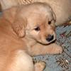 03 1828 Shayla  Feb 22 2003