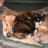 48 6706 Shiloh Kally Kitty Mar 6 2005
