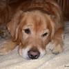 34 5939 Shiloh Nov 11 2004