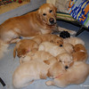 147 9002 Slammer Pups Jan 28 2009
