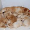 150 9235 Slammer Pups Feb 11 2009