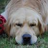 173 DSC_4065 Slammer Sept 7 2009