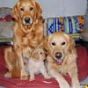 146 8593 Shayla Red Slammer Jan 18 2009