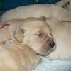 01 soleilxparker pups Nov 5 2007