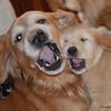 47 1196 Savanah Stormy Jan 2 2008