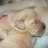 02 soleilxparker pups Nov 5 2007