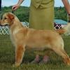 42 5156 Sydney Puppy Group Show Pic 1 June 13 2004 crop