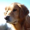 356 8268 SYdney 7th b-day Nov 21 2010