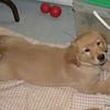 20 4378 Sydney Feb 7 2004